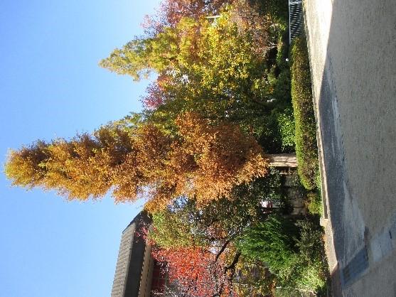 リリコさんのつぶやき「秋のコーディネート」
